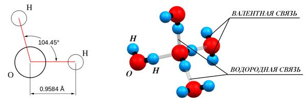 каждая молекула образует